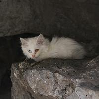 缘分有多神奇 篇一:被一只猫碰瓷是什么体验:我和白小贵故事的起源