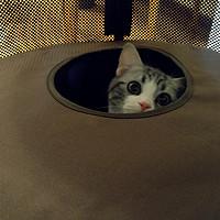 小荷才露尖尖角 — 记猫咪世界日本necosekai出品的猫咪三层别墅