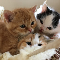 喵物分享及记五只小猫的诞生