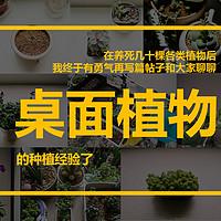 得意家的宝箱 篇五:桌面植物种植的(失败)经验总结