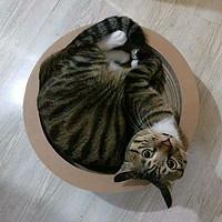 高萌预警 — 人生目标就是每日吸猫:分享主子的日用好物