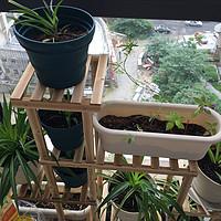 #买值618#我的生活阳台我的绿植