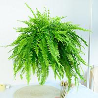 波士顿蕨盆栽桌面室内长藤垂吊肾蕨蕨类吊兰植物吸甲醛耐阴绿植