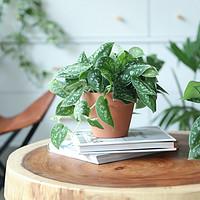 养花秘籍| VOL.1:什么植物都养不活?你可能只是放错了地方!