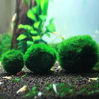 进口绿藻球水藻球观赏虾水晶虾缸用品鱼缸活体水草造景套餐包邮