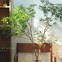 PHYSIS马醉木吊钟鲜切枝条日本进口家居室内小森系花期长水养绿植