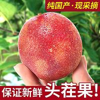 广西新鲜国产百香果净重5斤大果