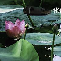 穷人三宝之 Canon 佳能 长焦55-250 stm 镜头化作一朵莲花