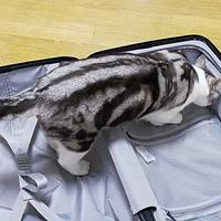 旅途中的好伴侣—MI 小米 90分 24/28寸 旅行箱