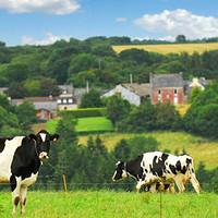 #晒单大赛#喝遍了全世界的牛奶,只为了告诉你哪款最好喝?