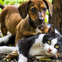 宠物圈 篇五:人宠共患病? 宠物驱虫的正确姿势