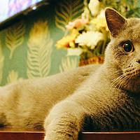 一日吸猫,终身复吸—不完全养猫指南&分享好物&晒猫片