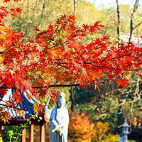 每日一景点:南京栖霞山的枫叶就快红了!这可是中国四大赏枫圣地之一,N多皇帝都来过~