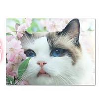 每日一景点 篇115:要旅行也要看猫!偷偷分享几个国内外撸猫圣地~
