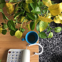 居家知识技巧 篇四:常见哪些毒性比较大的绿植?