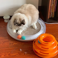 猫用品 篇三:养猫的最强全套装备:饮水机 猫碗 猫砂 猫玩具 猫抓板 猫窝 推荐分享