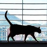 超爱毛茸茸 篇一:【喵星人接待全攻略】超多干货教你如何正确地饲养一只猫咪
