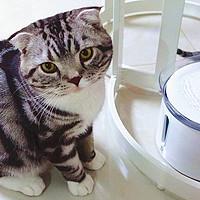 """C的大虎小豹 篇二:""""喵,多喝水!""""——霍曼 猫咪/宠物智能饮水机"""