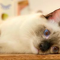 爱宠养成手册 篇二:家养猫咪常见病大全+治疗方案,为主子一键收藏!