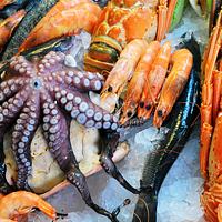 涨姿势 篇一:手把手教你如何挑选进口虾
