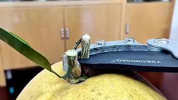 冬天到了,你的果园需要一把大力剪刀-树枝剪