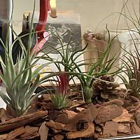 旧鱼缸+空气凤梨,打造懒人的桌面沙漠景观