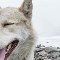 我在北极住了半个月,世界上离繁华最遥远的地方