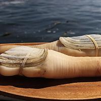 为什么全世界都在抢加拿大象拔蚌?