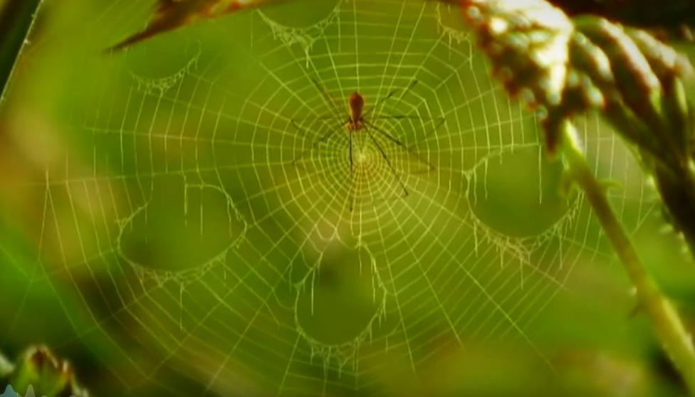 每一秒都萌到炸,法国高分动画神作《微观小世界》让孩子脑袋里轻松装进自然