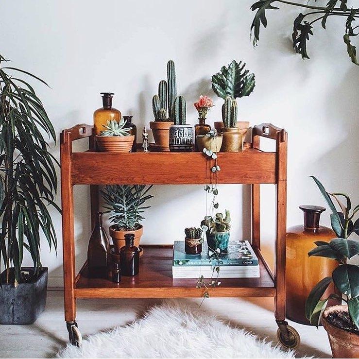 适合在家种植的9种仙人掌,附装饰灵感集~