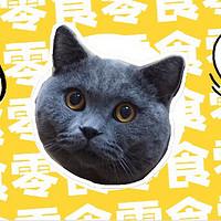 新手养猫指南进阶篇——8款智能好物提升你的养宠幸福感!