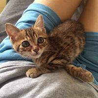 家有狸花初长成,分享养猫经验