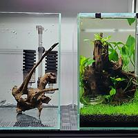 男友的水族世界 篇九:100元开虾缸,超支了