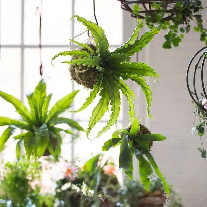 超级时尚!软装设计师最推荐的10款室内悬吊植物,净化空间又美化,家居颜值秒翻倍