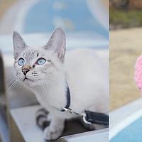 新手养猫攻略,新手养猫必看和好物分享