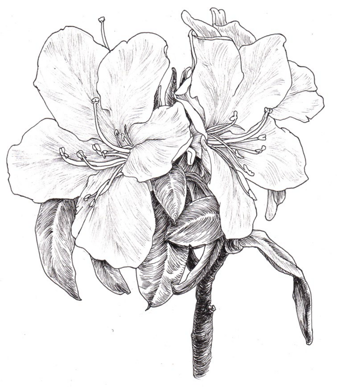春天了,快来画张简单又好看的花卉线描画!