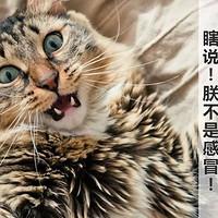 猫咪得了感冒怎么办?猫的感冒和人的感冒完全不一样