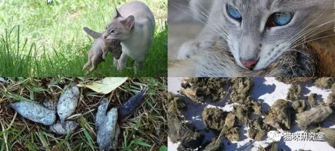 争议:猫能不能吃骨头?