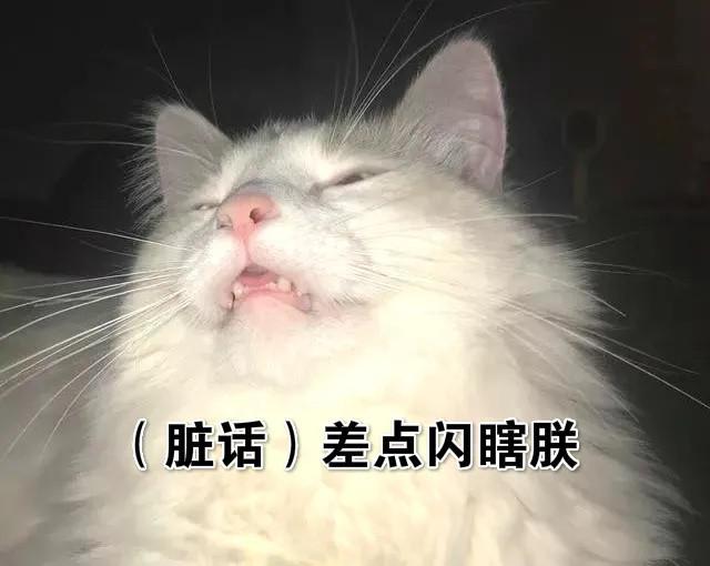 """""""因为拍照开闪光灯,猫咪失明了!"""""""