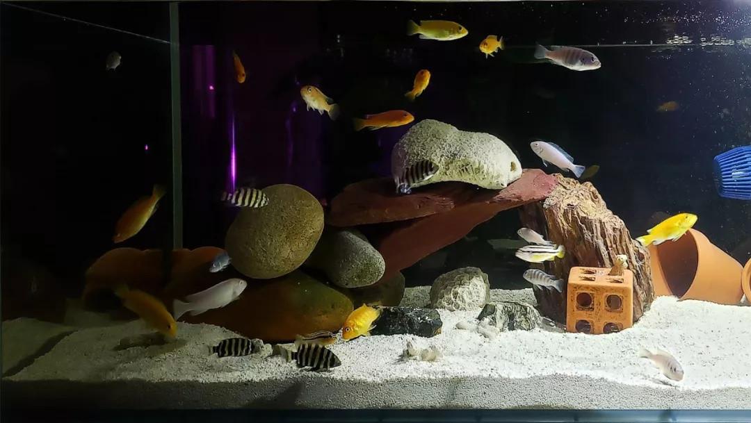鱼缸过滤系统滤材大集合!养鱼必须知道这些