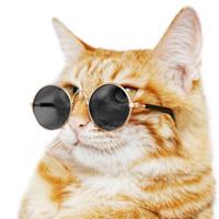 【变装计划】篇二:抗 UV 太阳眼镜的选购指南和推荐