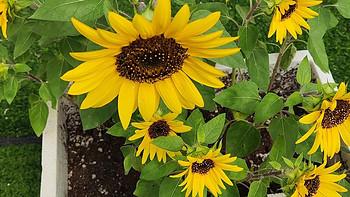 露臺種植經驗 篇三:露臺種花種菜的經驗總結