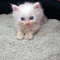 猫砂进化论,你给喵主子用的是什么猫砂?