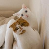 月均百元也能养猫?敲划算的养猫必须品看这!