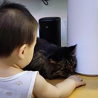 驱虫、疫苗、洗澡、剪指甲:养猫具体操作手册