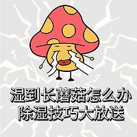 生活好物 篇五:湿到长蘑菇怎么办?除湿技巧大放送(附单品实测)