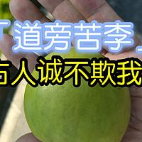 新奇水果 篇二十九:路边树上长的梨子还是苹果,到底味道如何?古人诚不欺我,道旁苦李是为真